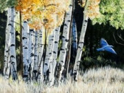 Bluebird in Birches by Terry Isaac