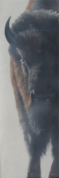 Bison in the Mist - Terry Isaac