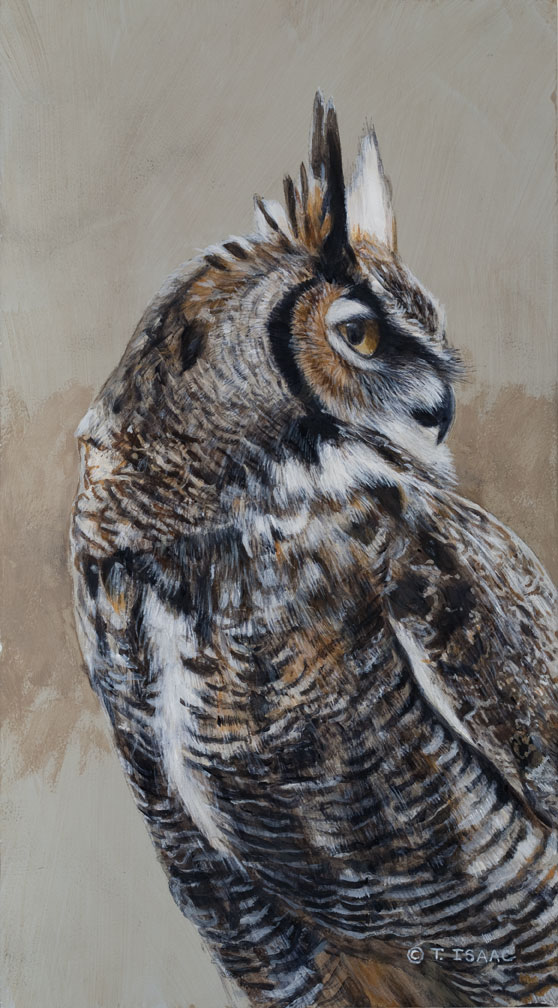 Great Horned Owl - Terry Isaac