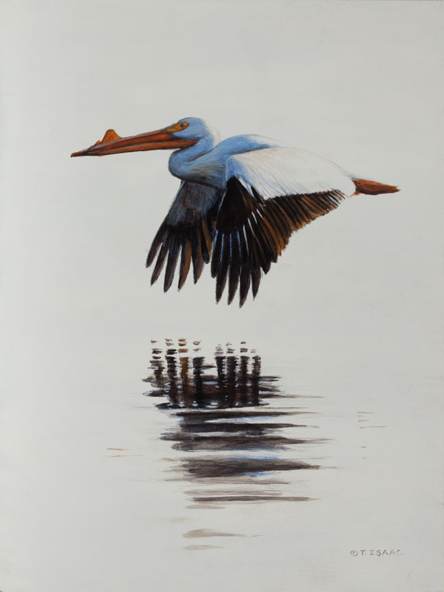 A Wonderful Bird Is A Pelican, by Terry Isaac