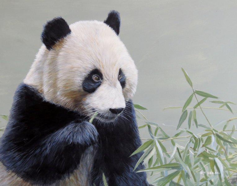 Panda - Terry Isaac