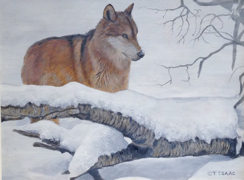 Winter Wolf - Terry Isaac