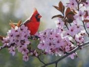 Backlit Cardinal - Terry Isaac
