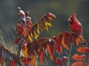 Cardinal and Sumac - Terry Isaac