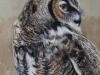 Great Horned Owl, by Terry Isaac