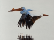 A Wonderful Bird Is A Pelican - Terry Isaac
