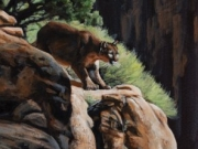 Cougar on the Rocks - Terry Isaac