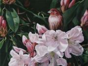 Shades of Pink - Terry Isaac