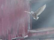Taking Flight - Terry Isaac