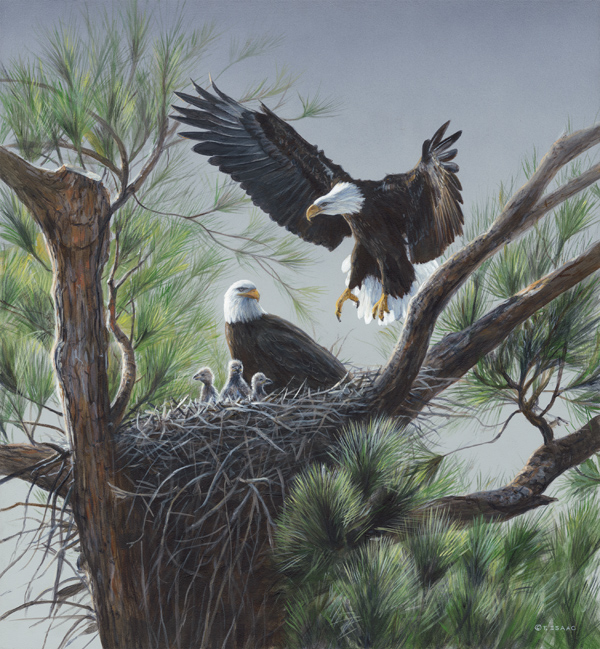 Eagle's Nest - Terry Isaac