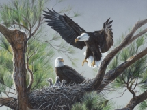 Eagle's Nest, by Terry Isaac
