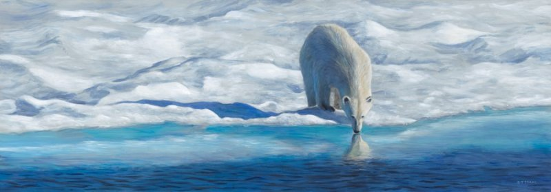 Arctic Reflections - Terry Isaac