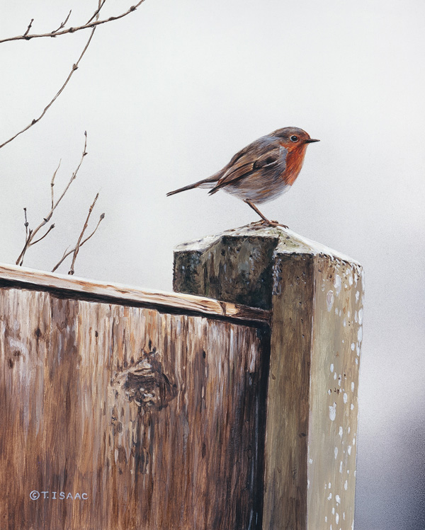 English Robin - Terry Isaac