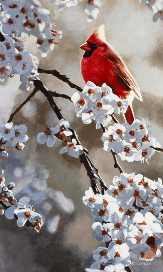 Spring Light Cardinal - Terry Isaac