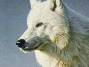 Arctic Wolf Portrait, by Terry Isaac