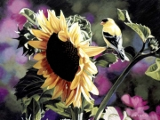 Goldfinch and Sunflower, by Terry Isaac