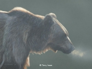 Grizzly Bear Study, by Terry Isaac