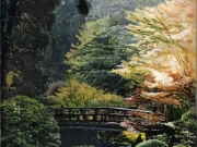 Japanese Gardens, by Terry Isaac