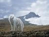tundra-song