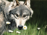 wolf-and-daisies