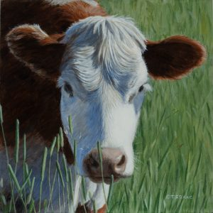 """Moo"" by Terry Isaac"