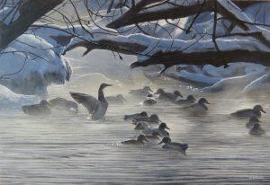 Winter Morning Mallards