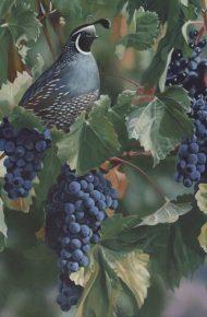 Quail and Grapes