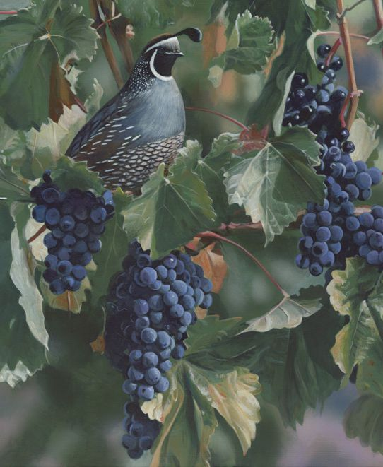 Quail and Grapes - Terry Isaac