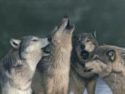 Isaac - Wolf Song