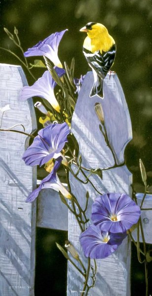 Morning Glory by Terry Isaac