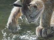 Curiosity by Terry Isaac