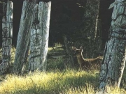 Haida Dreams by Terry Isaac