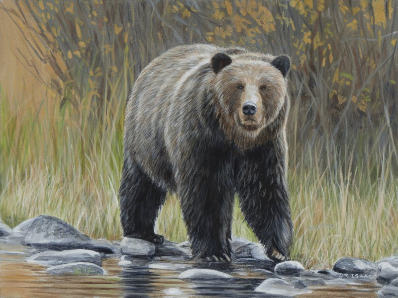 Curious Bear  by Terry Isaac