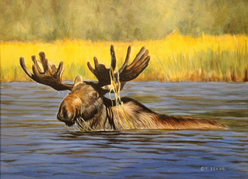 Evening Swim by Terry Isaac