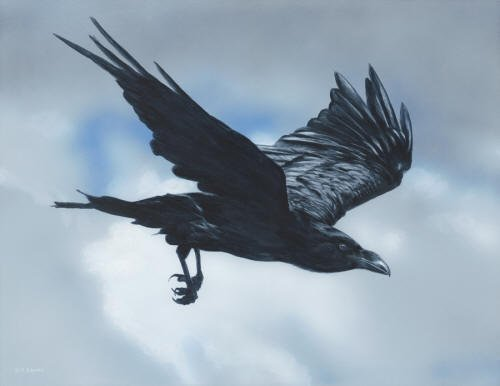 Flight of the Raven - Terry Isaac