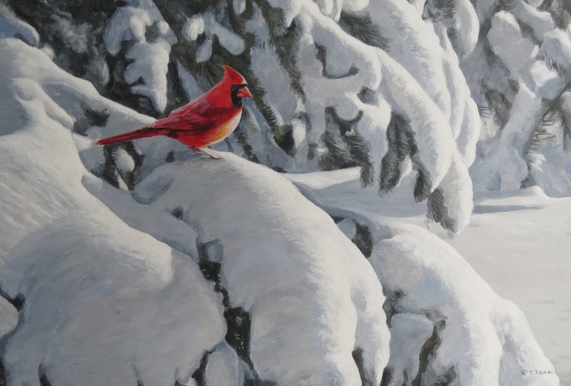 Cardinal in Snow by Terry Isaac
