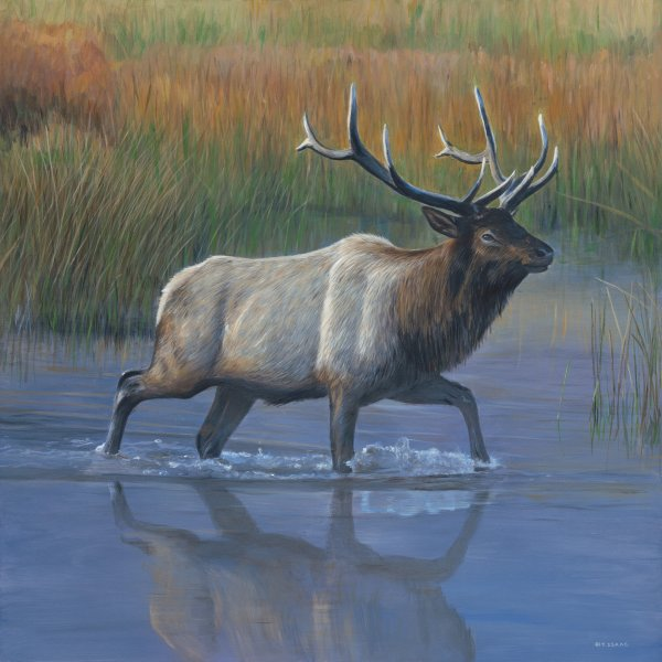 Elk Crossing by Terry Isaac