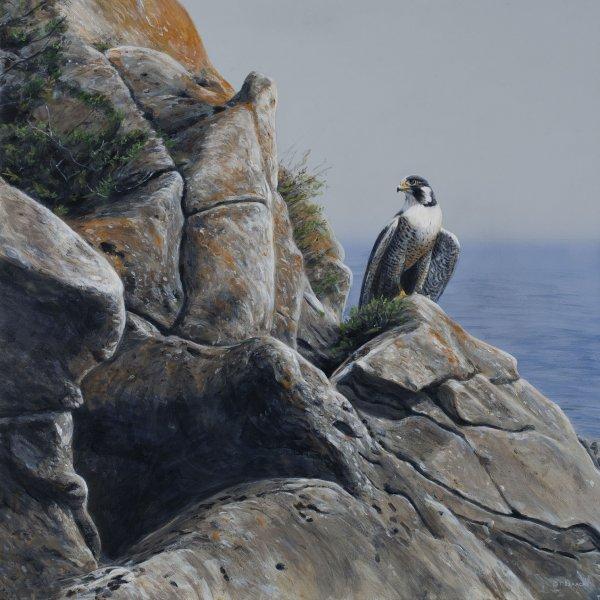 Peregrine Falcon - Terry Isaac