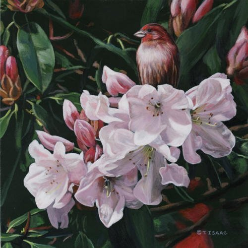 Shades of Pink - Terry Isaac