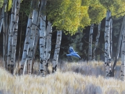 Bluebird in Aspens by Terry Isaac