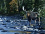 Manning Park Moose - Terry Isaac