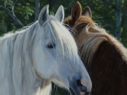 Horse Whispering - Terry Isaac