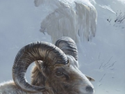 Winter Ram by Terry Isaac