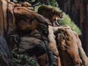 Cougar on the Rocks by Terry Isaac