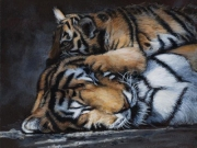 Warm Pillow by Terry Isaac