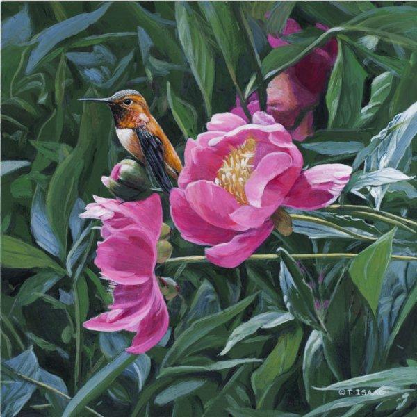 Rufous Hummingbird - Terry Isaac