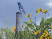 Bluebird and Balsam - Terry Isaac
