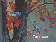 Fall Colors - Terry Isaac