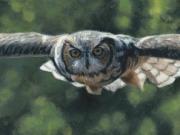 Silent Flight - Terry Isaac
