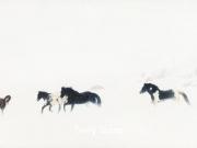 Winter Run - Terry Isaac